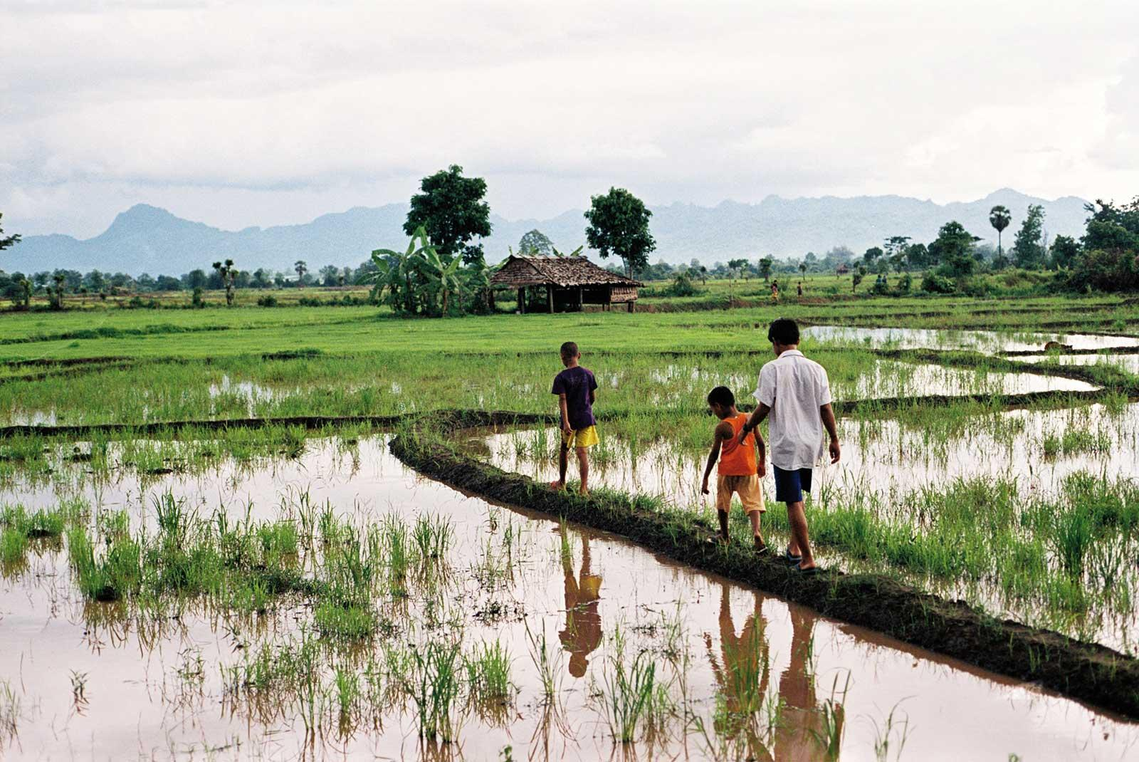 Kids walking across rice fields