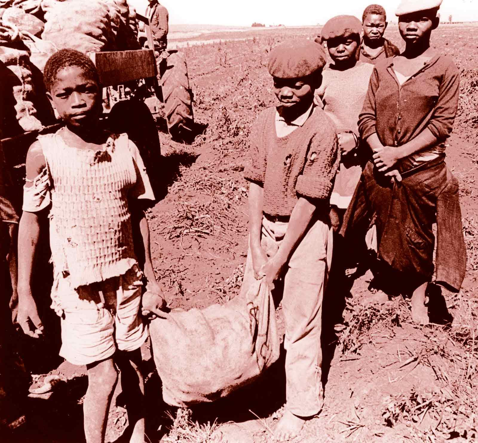 Child labourers in South Africa, 1970s