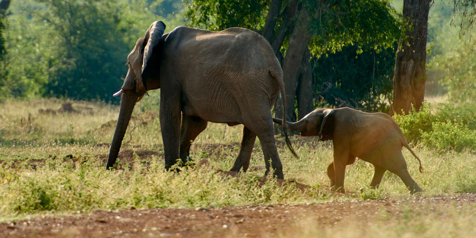 Two elephants, mother and child.
