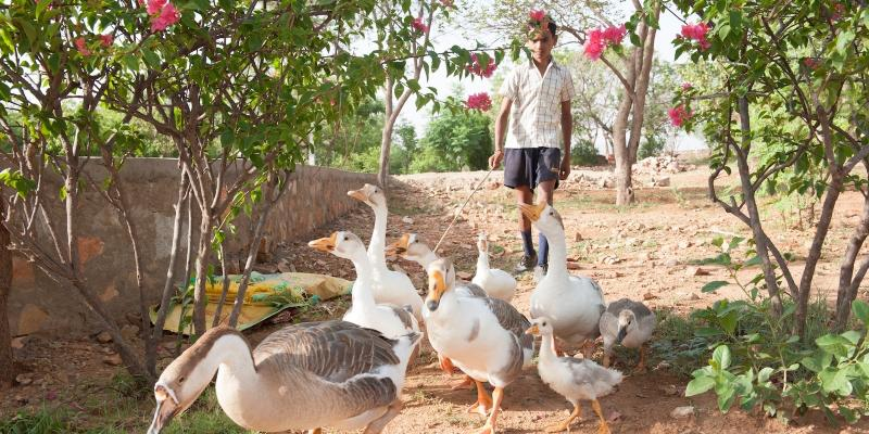 Ramesh with geese